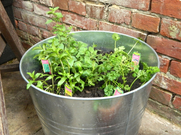 Outdoor Patio Herb Garden - Multi Herbs