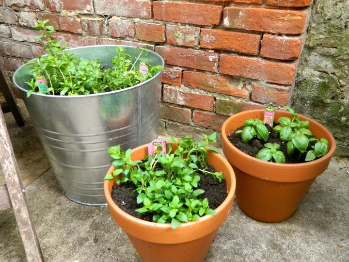 Outdoor Patio Herb Garden